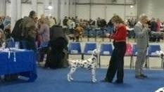 Best of Breed, Offordale Larissa, Alexander