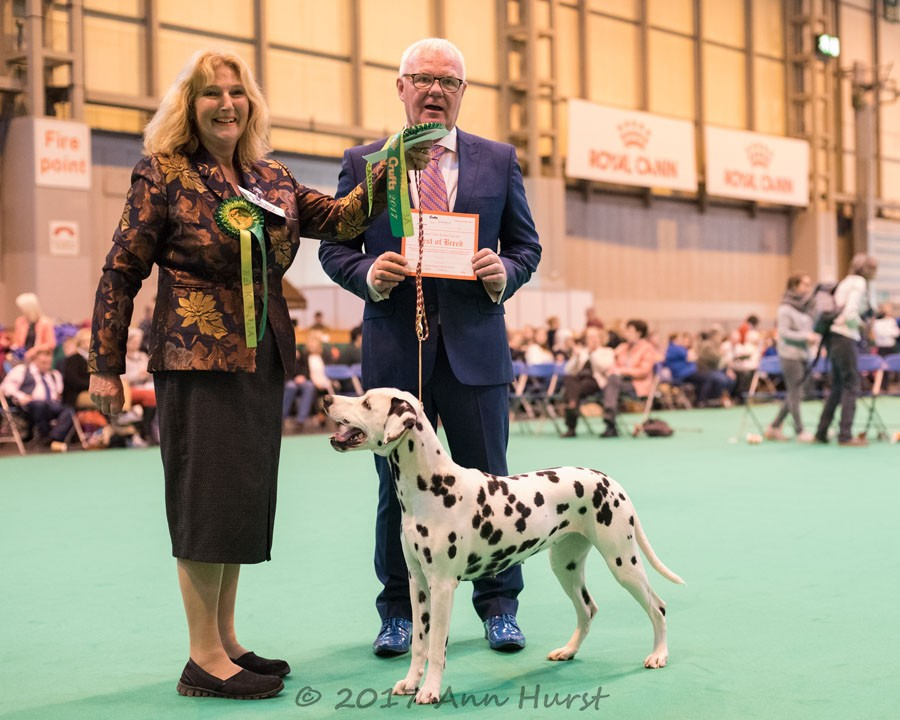 Best of Breed, Gwynmor High Five To Hunacres, Wilkinson